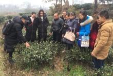洪雅县2018年新型职业农民(茶叶生产)培训